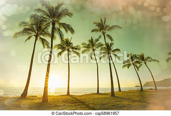 Hawaiian beach - csp58961957