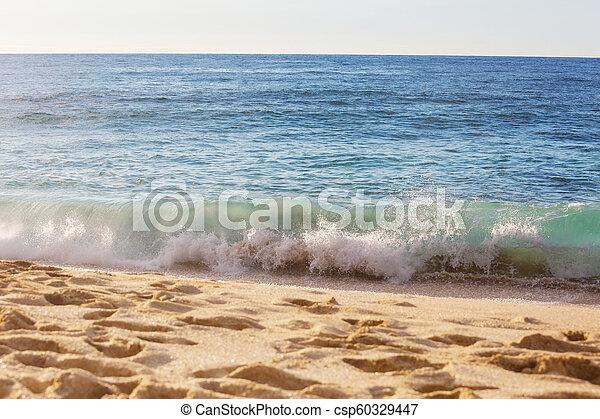 Hawaiian beach - csp60329447