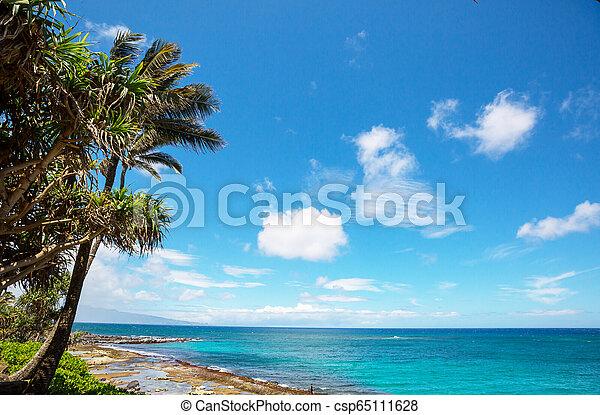Hawaiian beach - csp65111628