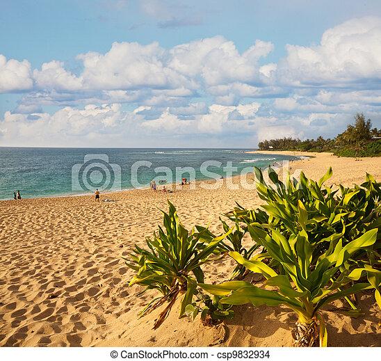 Hawaiian beach - csp9832934