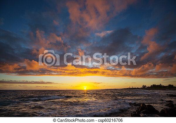 Hawaiian beach - csp60216706
