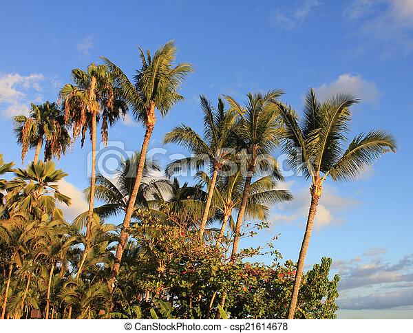 hawaiian palm trees - csp21614678