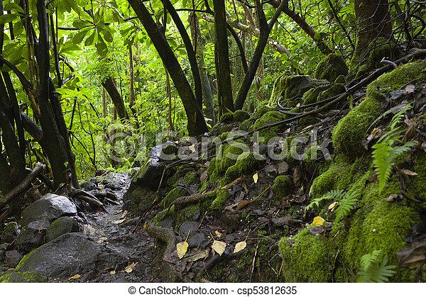 Hawaiian Rainforest, Maui, Hawaii - csp53812635