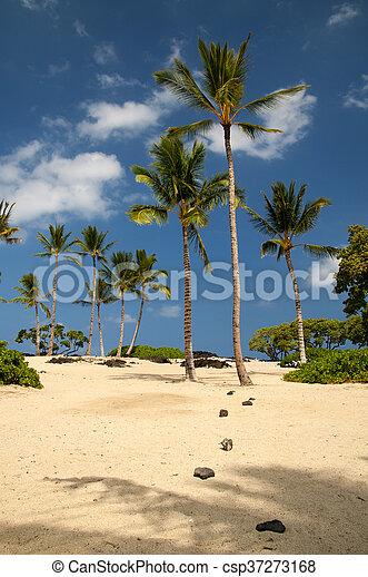 Hawaiian sand beach - csp37273168