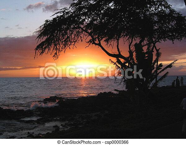Hawaiian Sunset - csp0000366