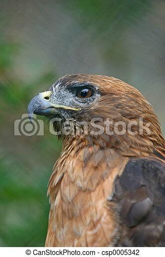 Hawk 1 - csp0005342