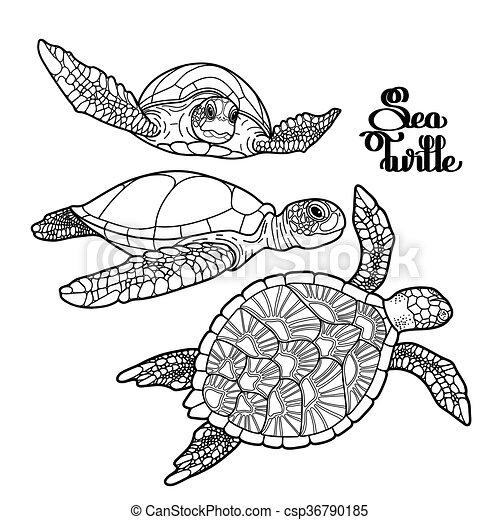 Hawksbill schildkröte, meer, sammlung. Turtle, färbung,... Vektor ...