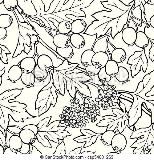 hawthorn seamless pattern - csp54001263