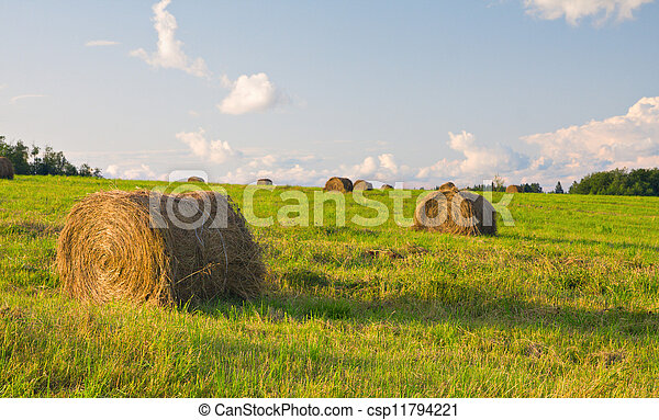 hay bales in a field - csp11794221