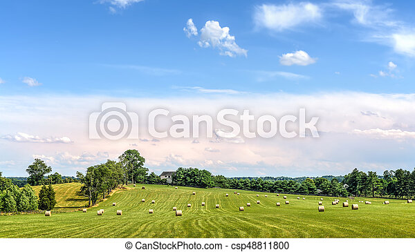 Hay bales in a green grassy field on a Maryland farm in summer at harvest - csp48811800