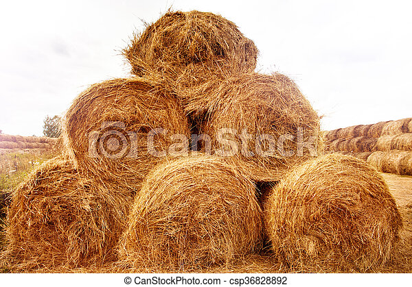 Hay bales on the field at summer  - csp36828892