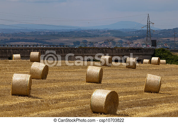 Hay bales on the field - csp10703822