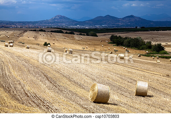 Hay bales on the field - csp10703803