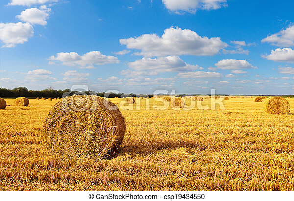 Hay bales sitting in a field - csp19434550