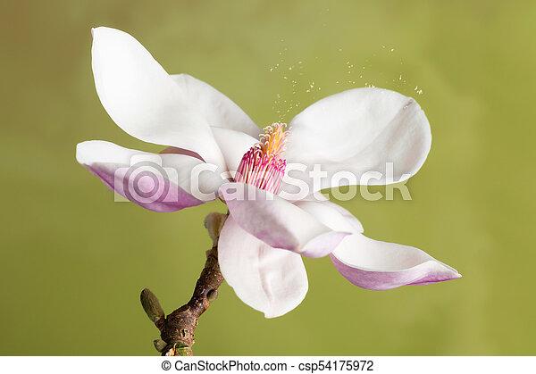 Hay fever causing pollen - csp54175972