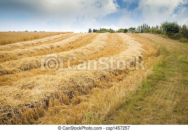Hay Field - csp1457257