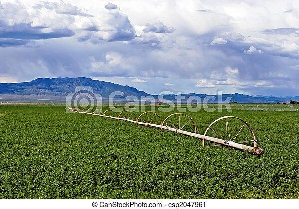 Hay Field - csp2047961