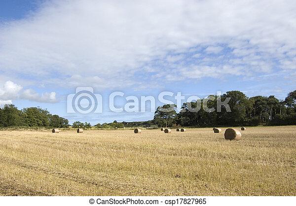 Hay field - csp17827965