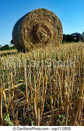Hay field - csp1112835