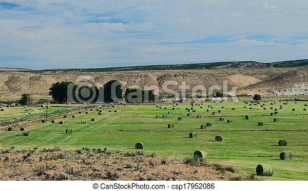 Hay Field with Irrigation and Hay Rolls - csp17952086