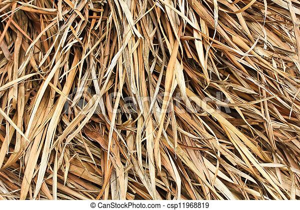 Hay Maple Leaf - csp11968819
