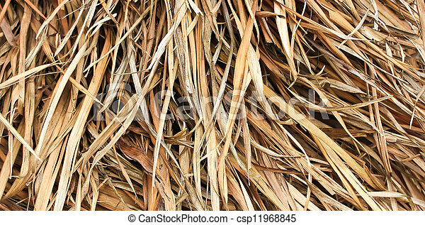 Hay Maple Leaf  - csp11968845