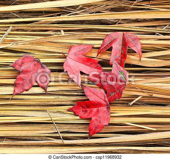 Hay Maple Leaf  - csp11968932