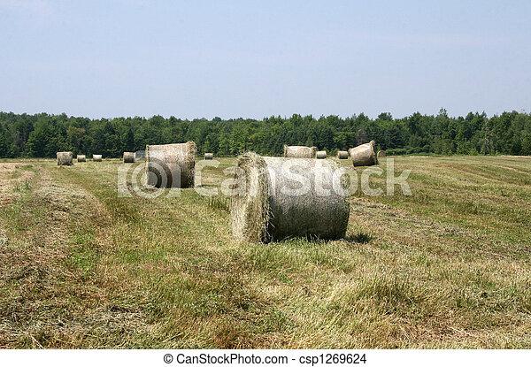 Hay - csp1269624