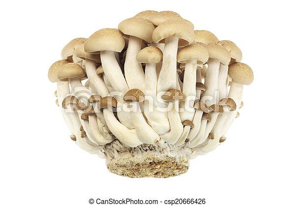 Hongos de judías marrones - csp20666426
