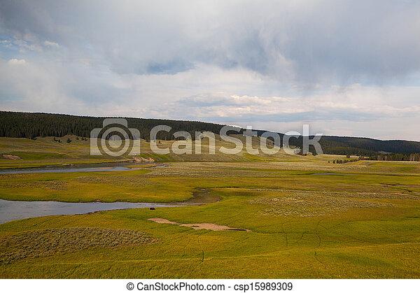 Hayden Valley - landscape of American Bison - csp15989309