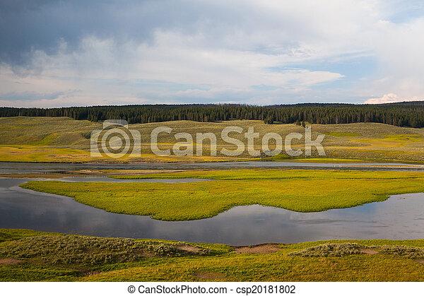 Hayden Valley - landscape of American Bison - csp20181802