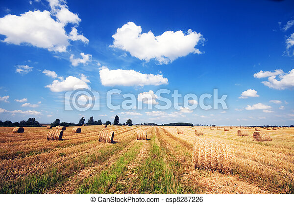 Haystacks in the field - csp8287226