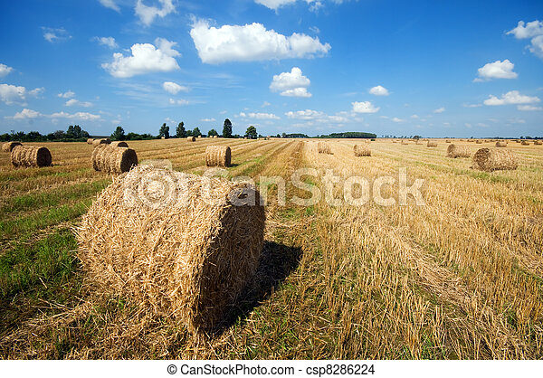 Haystacks in the field - csp8286224