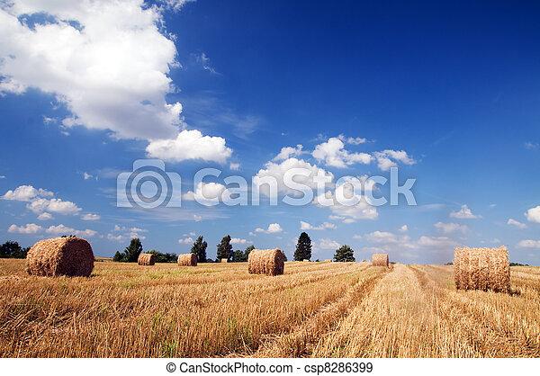 Haystacks in the field - csp8286399