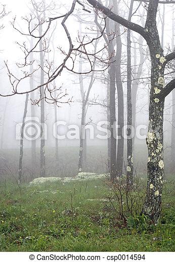 Haze trees - csp0014594