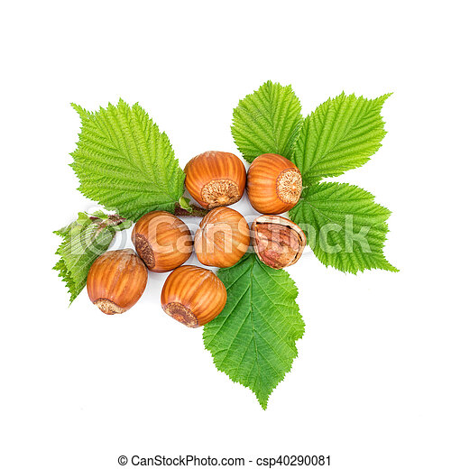 Hazelnut or filbert nuts with leaves on white - csp40290081