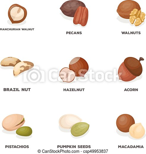 Hazelnut, pistachios, peanuts and other types of nuts.Different types of nuts set collection icons in cartoon style vector symbol stock illustration web. - csp49953837