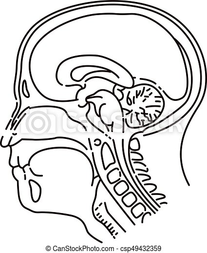 Head Illustration Of Mri Examination Vector Illustration Original
