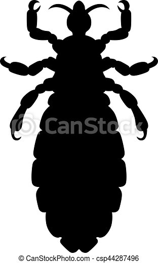 Head louse - csp44287496