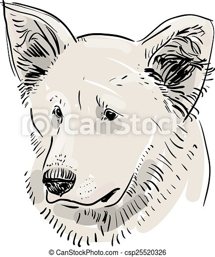 Head, muzzle the dog. Shepherd. Sketch drawing. Black contour on a white background. vector - csp25520326