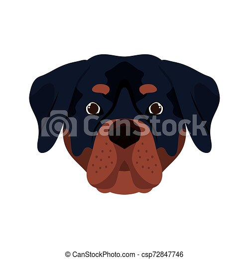 head of cute rottweiler dog on white background - csp72847746