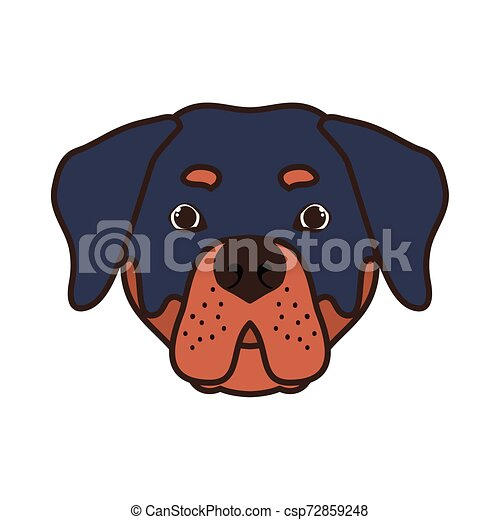 head of cute rottweiler dog on white background - csp72859248