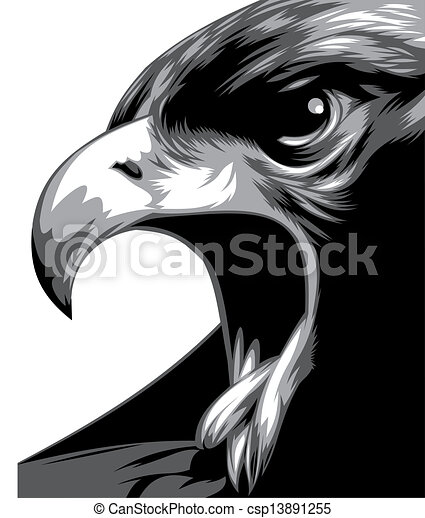 Head of eagle in black and white csp13891255