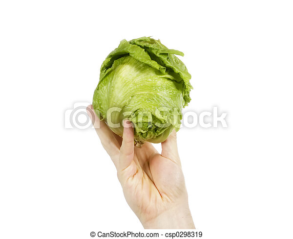 Head of Lettuce - csp0298319