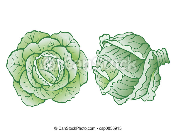 heads of cabbage - csp0856915