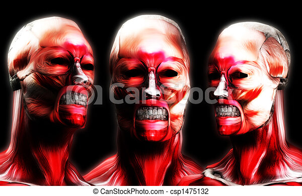 Heads Of Muscle 5 - csp1475132