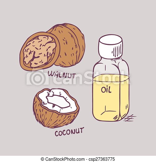 Healing coconut and walnut oils set in vector - csp27363775