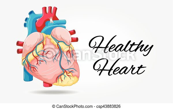 Healthy heart diagram on white background illustration healthy heart diagram on white background csp43883826 ccuart Choice Image