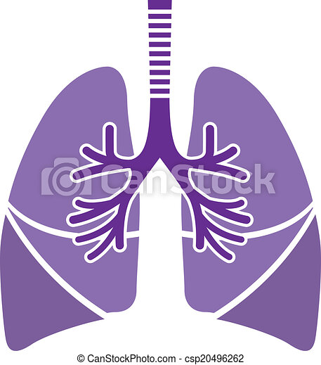 healthy lungs healthy lungs vector illustration clip art eps rh canstockphoto com lungs clipart lunges clipart