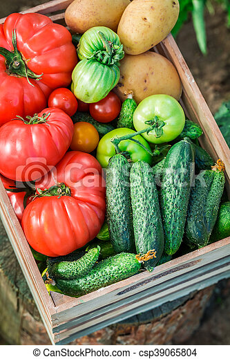 Healthy tomatoes and cucumbers in greenhouse - csp39065804